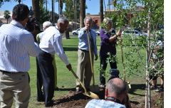 Planting a tree at Armory Park.