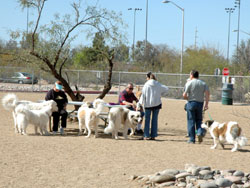 Meeting of dogs in Udall Park